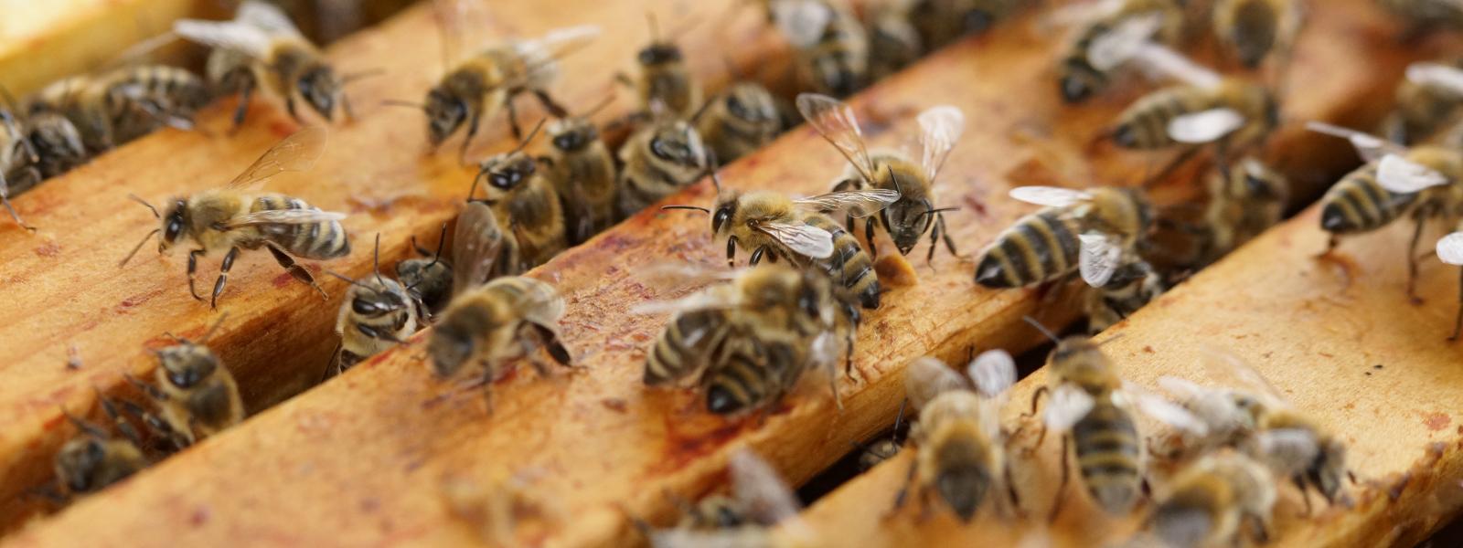 Приглашаем к сотрудничеству Всех, для кого пчела также дорога как и нам