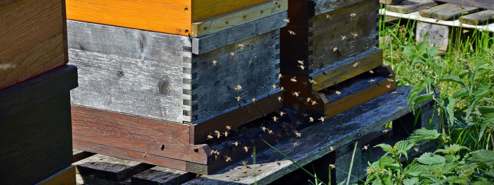 Покупаем мед оптом, дорого. Приглашаем к сотрудничеству пасечников и заготовителей.